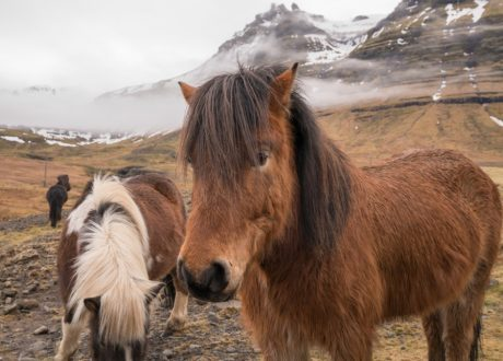 IJslanders, Snaefellsnes