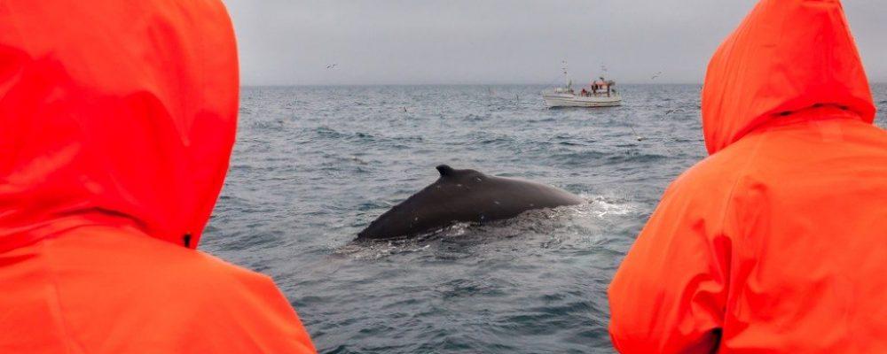 Weekend walvis safari IJsland
