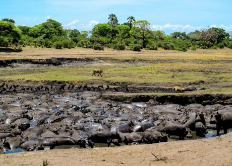 Foto: © Brian Harries