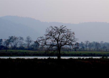 Foto: © Ajay Panachickal