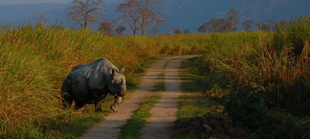 Foto: © Satish Krishnamurthy