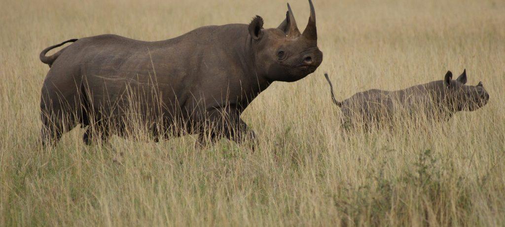 Serengeti National Park >> Masai Mara National Reserve | Sundowner Wildlife Holidays