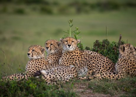 Foto: © Make it Kenya/Stuart Price