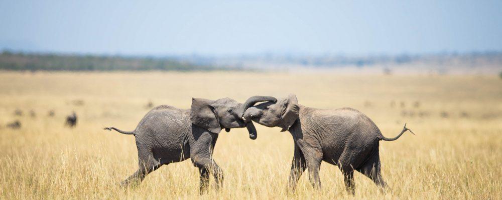 Foto: © Make it Kenya/Stuart Price