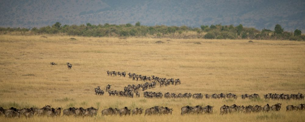 Foto: © Foto: © Make it Kenya/Stuart Price
