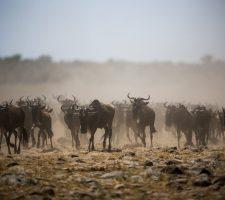 Foto: © Make it Kenya / Stuart Price