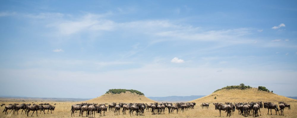 Foto: © Make it Kenya / Stuart Price