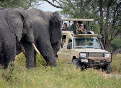 Legendary Serengeti