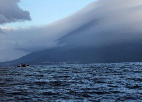 Walvissen en dolfijnen op Pico