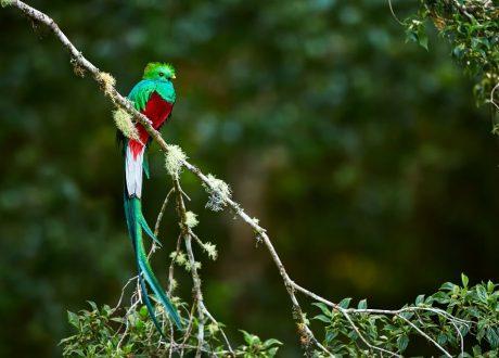 Los quetzal NP