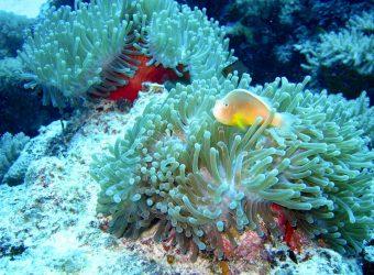 Mafia Island Onderwater