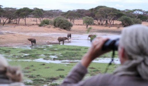 Foto: © Wayo Africa