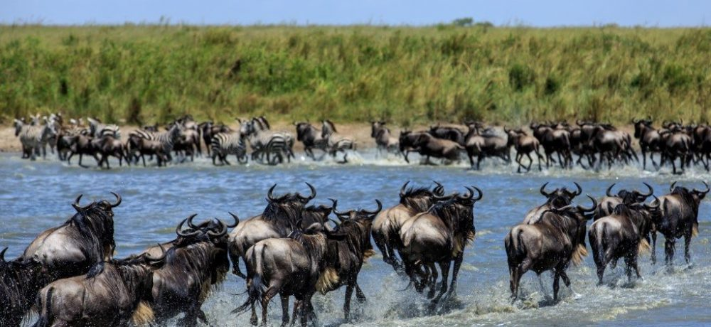 Masai Mara, Noord Tanzania