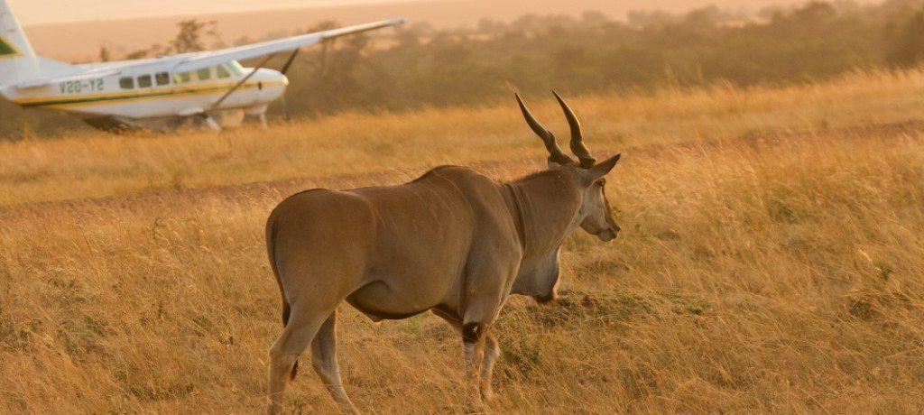 Masai Mara, Fly in, Kenia