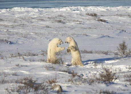 Foto: Colin McNulty © Natural Habitat Adventures