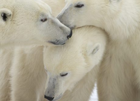 Foto: Henry Holdsworth © Natural Habitat Adventures