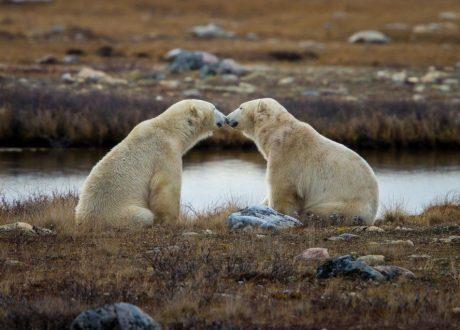 Foto: Jeff Goldberg © Natural Habitat Adventures