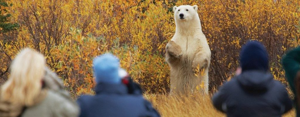 Nanuk_PolarBear-Lodge_Credit-Jerry-Grajewski
