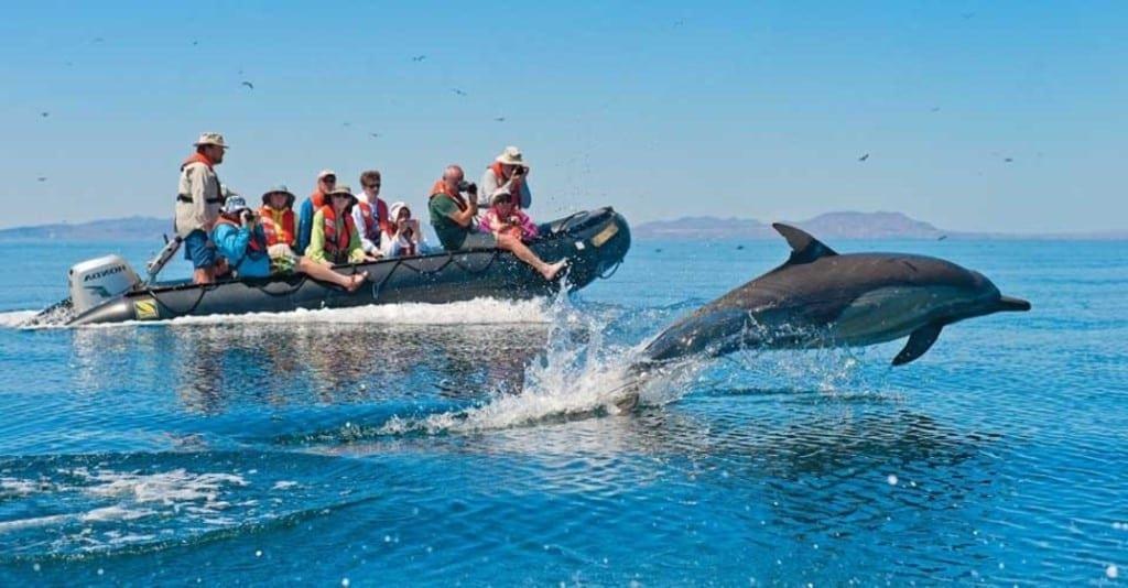 Dolphins Foto Sevn-Olof Lindblad
