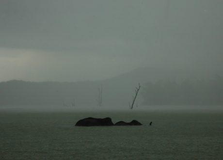 Kabini meer. Foto: © Prashant Ram
