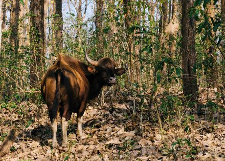 Nagarhole National Park. Foto: © Ashwin Kumar