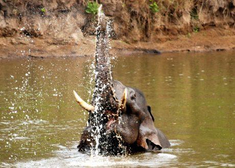 Nagarhole National Park. Foto: © Dhruvaraj S.