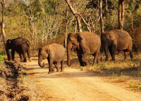 Nagarhole National Park. Foto: © Karthik Narayana