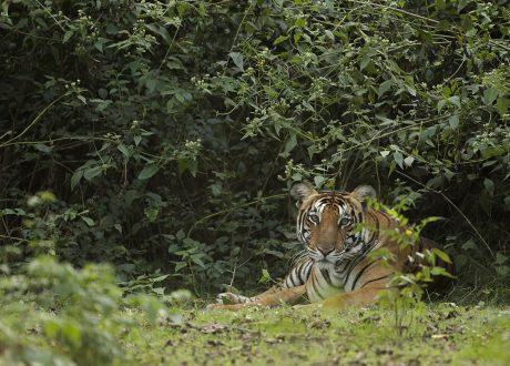 Nagarhole National Park. Foto: © Rohit Varma