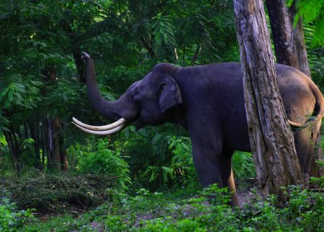 Wayanad Wildlife Sanctuary. Foto: © Nagesh Jayaraman