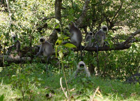 Wayanad Wildlife Sanctuary. Foto: © Ashwin Kumar