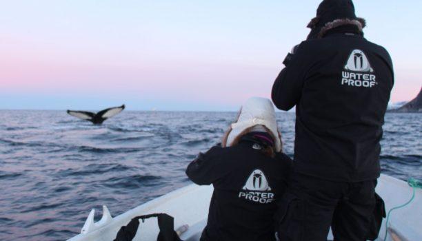 Orka, Waterproof Expeditions, Noorwegen