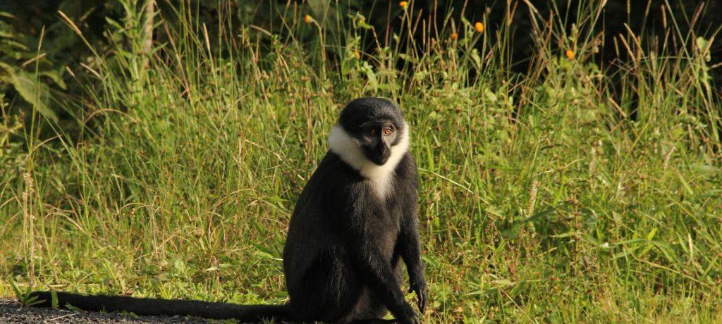 Foto: © Rwanda Government