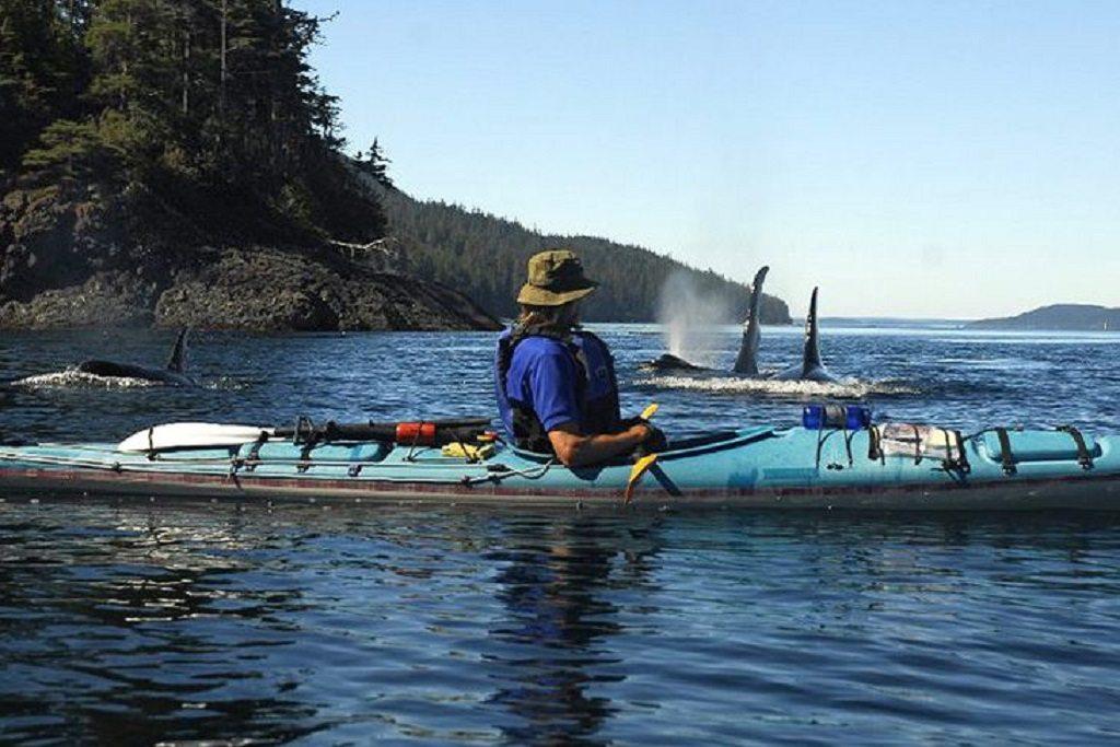 Orca Camp MC Neill, Canada