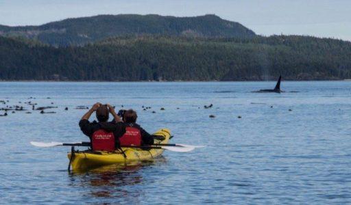 Orca Camp
