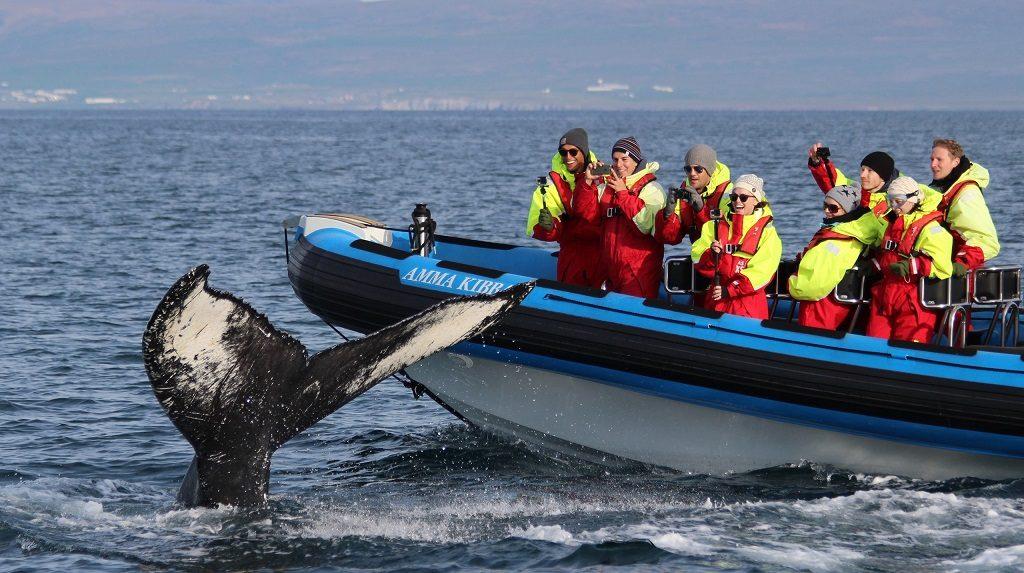 Kleding walvis spotten