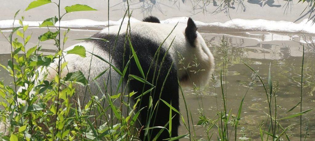 Pandabeer-2