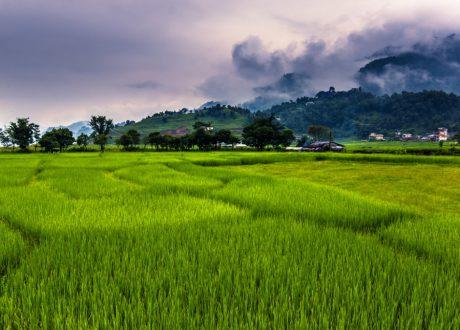Pokhara rijstvelden