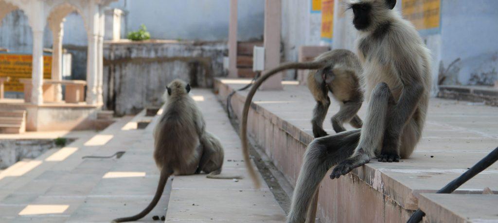 Pushkar. Foto: © Seba Della & Sole Bossio
