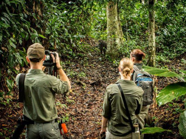 Odzala National Park laagland gorilla tracking