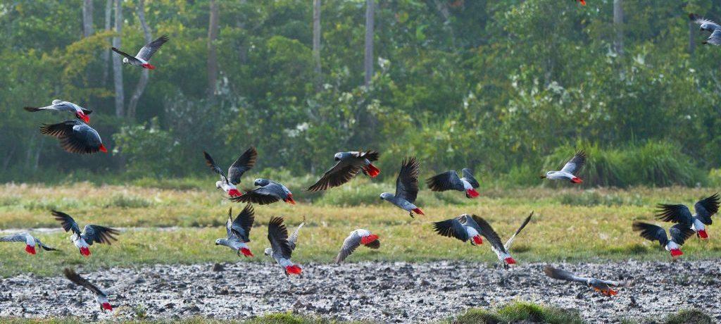 Odzala Discovery Camps-ODC Lango Bai birdlife
