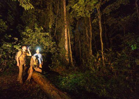 Odzala National Park nacht wandeling