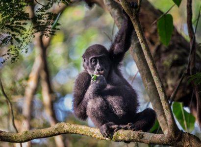 Veel gestelde vragen over Congo, Odzala