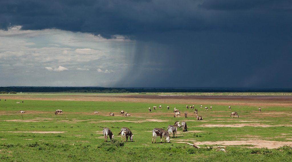 Rain Tanzania