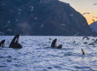 Orca Fjordhotel, Lyngenfjord, Noorwegen