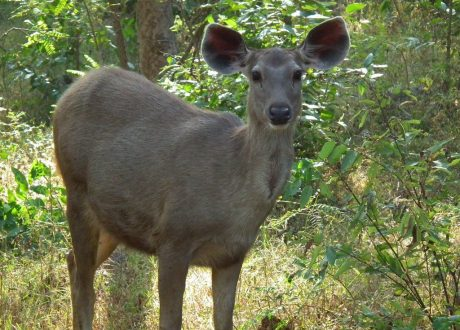 Pench and Kanha Pictures