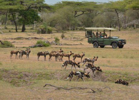 Foto: © Selous Safari Company