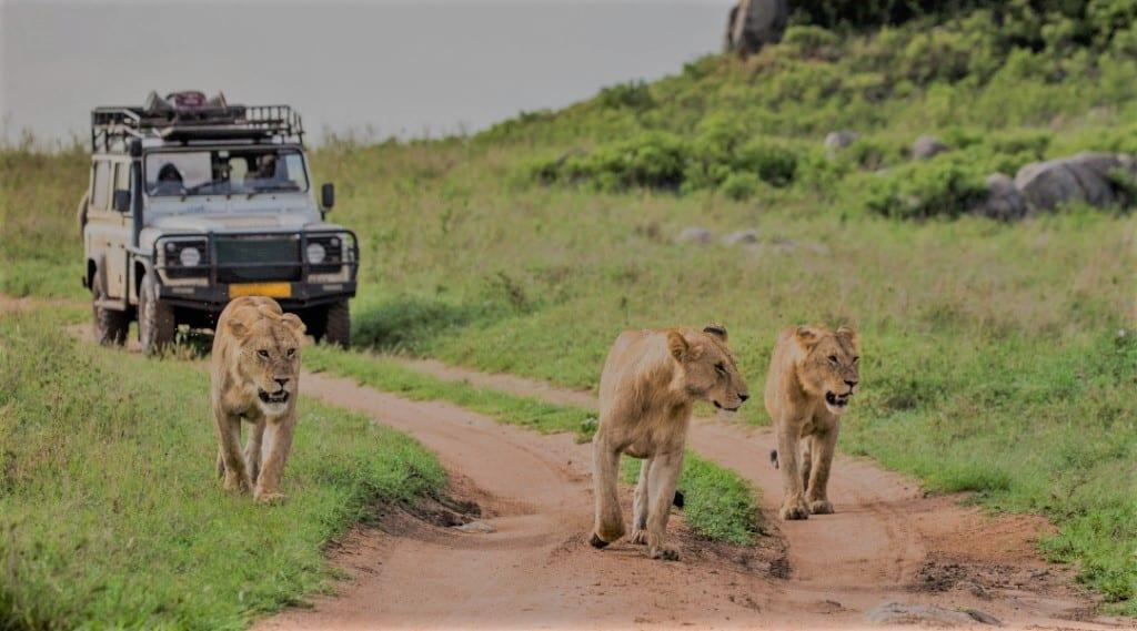 Serengeti National Park, game drive, Tanzania safari rondreis