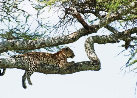 Foto: © Harvey Barrison