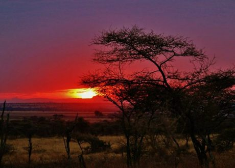 Serengeti-sundown-e1476442128658