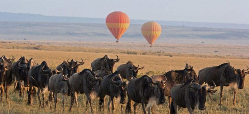 Wildebeest migratie Tanzania, Noord Tanzania